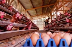 Regulasi Harga Acuan Ayam Segera Direvisi, Ini Rincian…