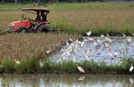 Lahan Menyusut Tapi Produksi Padi Jateng Diklaim Meningkat