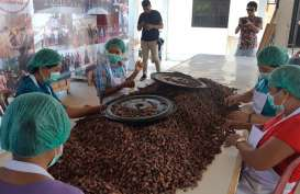 Kakao Jembrana Menjadi Pilot Project Desa Devisa LPEI