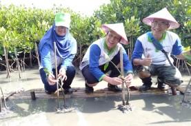 Mangrove Edupark, Upaya Pertamina Selamatkan Pesisir…