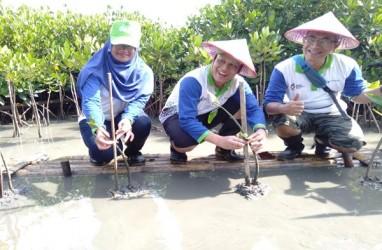 Mangrove Edupark, Upaya Pertamina MOR IV Perbaiki Pesisir Semarang
