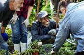 Jalan Kaki dan Berkebun Turunkan Risiko Kanker Prostat Hingga 50 Persen