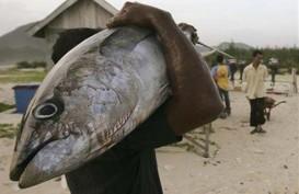Ternate Gelar Festival, Warga Gratis Makan Ikan Tuna Olahan Chef