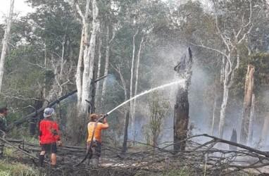 Bank Dunia : Kebakaran Hutan Indonesia Sebabkan Kerugian US$5,2 Miliar