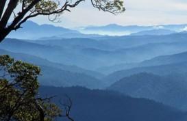 Aceh Tamiang Gunakan Sawit untuk Lindungi Ekosistem Leuser