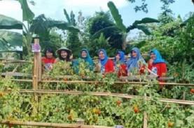 Program Wanita Matilda Tambah Lahan Produktif di Balikpapan
