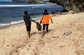 Lagi, Bangkai Penyu Ditemukan di Pantai Gunungkidul
