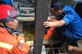 Belasan Ular Kobra Ditemukan di Rumah Warga di Kembangan