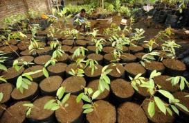 KPH Wilayah VI Gorontalo Bagikan 3.000 Bibit Pohon ke Masyarakat