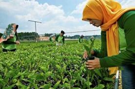 Ekonomi 2020 Penuh Tantangan, RAPP Konsolidasi Internal
