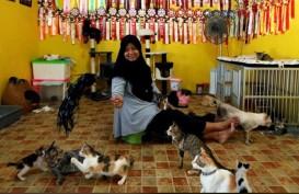 Ibu Rumah Tangga Ini Selamatkan 250 Kucing Terlantar