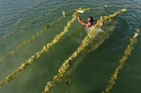 Sistem Resi Gudang Bantu Petani Sulsel Ekspor Rumput…