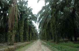 Replanting Kebun Sawit di Musi Banyuasin Capai 12.238 Hektare