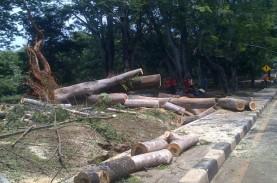 Pohon Tumbang di Grogol Petamburan Timpa Kabel Udara