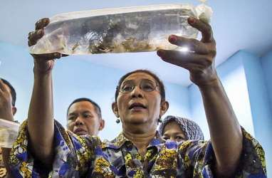 Susi Akui Tak Mampu Hadang Total Penyelundupan Benih Lobster