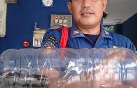 Belasan Anak Ular Kobra Muncul di Permukiman Warga Cipinang Melayu
