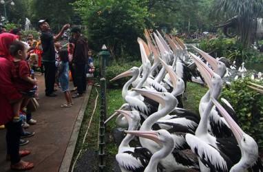 Pengunjung Kebun Binatang Ragunan Capai 92.880
