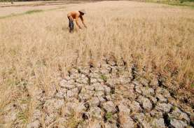 BMKG Prediksi Tahun Depan Tak Ada Anomali Cuaca