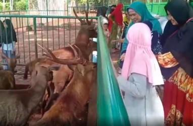 Tahura Sultan Alam di Mandiangin Diserbu Wisatawan