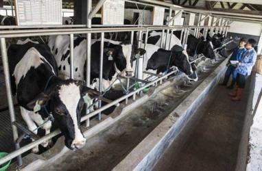 Penguatan Koperasi Jadi Kunci Pengembangan Produksi Susu Segar