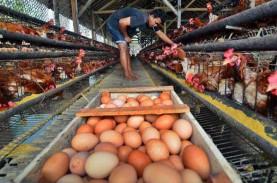 Margin Distribusi Telur Ayam Ras Turun