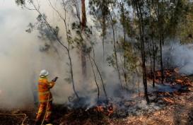 Australia Umumkan Darurat Bencana Kebakaran Hutan