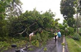 Pohon Tumbang Timpa Mobil Wisatawan di Gunungkidul