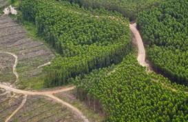 Kinerja Sektor Kehutanan Bakal Dipacu dalam 4 Tahun ke Depan