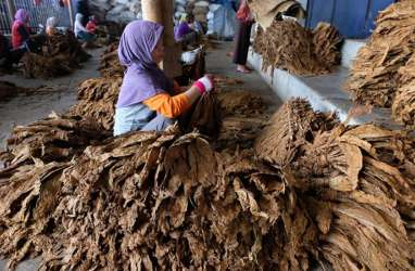 Pascapanen, Impor Tembakau Jawa Tengah Malah Naik