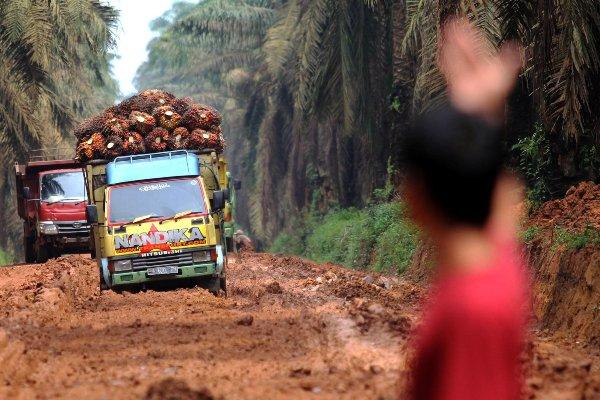 Sebuah truk melewati jalan penuh lumpur di Mesuji Raya, Ogan Komering Ilir, Sumatra Selatan, Rabu (11/1/2017). - ANTARA FOTO/Budi Candra Setya
