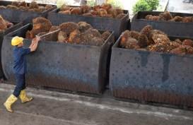 Riau Lanjutkan Berjuang Peroleh Dana Bagi Hasil Kelapa Sawit