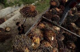 Riau Masih Perjuangan Dana Bagi Hasil Sawit kepada…