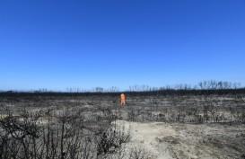 Di Balik 'Liarnya' Kebakaran Hutan Australia
