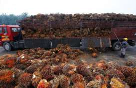 Gapki Sarankan Indonesia Jaga Pasar Minyak Sawit Asia Selatan