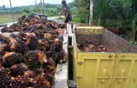 Riau Minta 80 Persen Dana Bagi Hasil Sawit untuk Daerah Penghasil