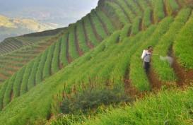 Sektor Agribisnis Masih Terkontraksi