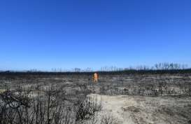Dukungan Publik ke PM Morrison Anjlok Gara-gara Telat Tangani Kebakaran HUtan