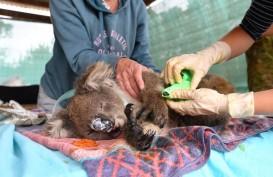 Pemerintah Australia Siapkan 50 Juta Dolar untuk Pemulihan Hewan Liar