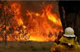 Fixed! Kebakaran Hutan di Australia akibat Perubahan Iklim