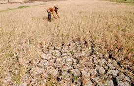 Pemprov Jateng Siapkan Asuransi untuk Lahan Puso Akibat Banjir