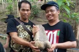 Warga Indramayu Temukan Fosil Gajah Purba, Begini…