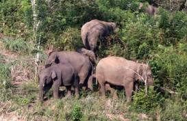Seekor Gajah Sumatra Liar Masuk Perkarangan SD di Bener Meriah