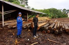 Polisi Sita 850 Batang Log dan Kayu Olahan Ilegal