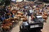 Hewan Ternak di Ponjong dan Rongkop Diisolasi