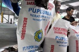 Alokasi Pupuk Bersubsidi di Bangkalan Berkurang