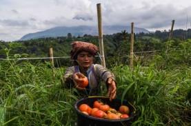 Sentra Pengembangan Hortikultura Berorientasi Ekspor,…