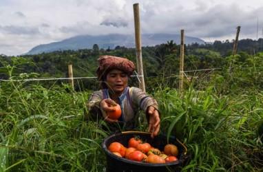 Sentra Pengembangan Hortikultura Berorientasi Ekspor, Tingkatkan Ekonomi Daerah
