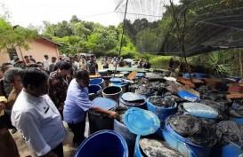Wisatawan Mancanegara Kapok Datang ke Bintan, Ini Penyebabnya