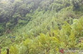 Polisi Temukan Ladang Ganja 5 Hektare di Sumut