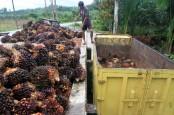 Harga TBS Riau Turun Hingga 5,72 Persen